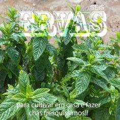 Aprenda  a plantar em casa 6 tipos de ervas para chá