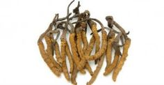 Constantly Tired? Here Are 10 Herbs To Increase Energy, Vitality, And Adaptability can I grow these in PA