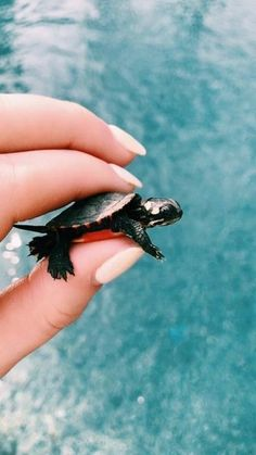 New Pictures turtles pet baby Thoughts Boys and girls employ a all-natural affi. : New Pictures turtles pet baby Thoughts Boys and girls employ a all-natural affi… , … , Cute Little Animals, Cute Funny Animals, Cute Dogs, Cute Creatures, Beautiful Creatures, Animals Beautiful, Majestic Animals, Cute Turtles, Baby Sea Turtles