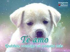 Resultado de imagen para imagenes Couple Quotes, Labrador Retriever, Dogs, Google, Facebook, Information Technology, Respect, Messages, Imagenes De Amor