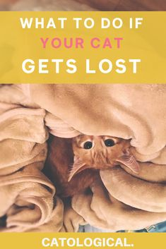 Like any pet, cats can wander off and get lost. This is what to do if your cat gets lost! #CatTips #CatHelp #LostCat #KittenTips #KittenHelp #CatOwner #CatFacts Pet Cats, Cats And Kittens, Cat Love Quotes, First Time Cat Owner, Kitten Breeds, Cat Diet, Kitten Care, Cats For Sale, Cat Care Tips