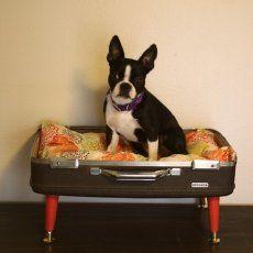 pet bed! #DIY #decoracion #vintage #maletas antiguas #repurposed #upcycled