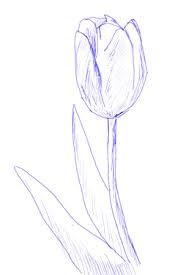 Image result for tulip drawings