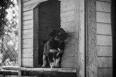 Little black puppy looking nostalgic Black Puppy, Little Puppies, Photography Portfolio, Dogs, Animals, Animales, Tiny Puppies, Animaux, Small Puppies
