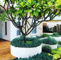 Quick check of our Sorrento project before photo shoot next week. Plants couldnt look better Tropical Landscaping, Landscaping Plants, Front Yard Landscaping, Small Tropical Gardens, Tropical Plants, Canna Lily, Exterior, Garden Landscape Design, Outdoor Planters