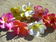 plumeria in my hair, hawaii on my mind.