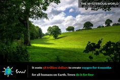 #trees #oxygen #facts