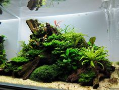 Aquascaping, an art.