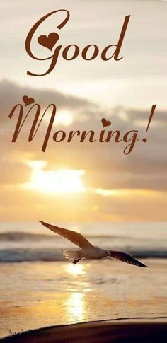 "Good Morning, Friends. I hope your day is everything YOU want it to be. ~~ Click on the pic to access my growing collection of ""Good Morning / General"" greetings on my Facebook Page. Please ""Friend"" or ""Follow"" me while you are there. ""Follow"" me here on Pinterest, too. <3"