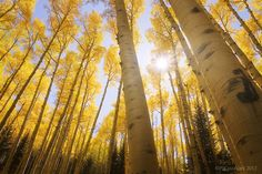 Flagstaff, Arizona, USA Land of Gold by htdcam81