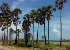 On why a friend should be like a palm tree..