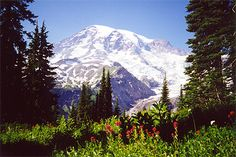 Mt. Ranier National Park - Washington