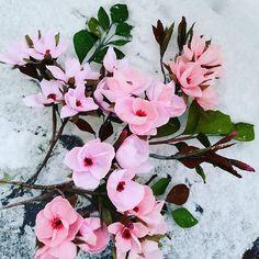 #Handmade #paper #flowers #crepepaperflowers #decoration #snow #spring #winter