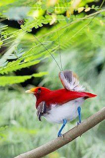 Blog do liraneto: Cone© Passaros exóticos de Parque New Guinea