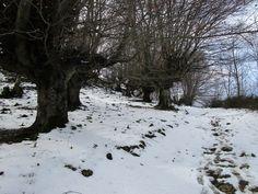 https://flic.kr/p/Eqc5Wd | Nieve pura y sin pisar en Santa Bárbara de Gorriti (Navarra).