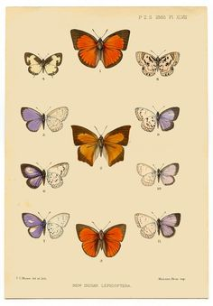 The Graphics Fairy - Instant Printable Art - Antique Butterfly Butterfly Images, Orange Butterfly, Vintage Butterfly, Butterfly Print, Clip Art Vintage, Images Vintage, Vintage Pictures, Retro Vintage, Art Antique