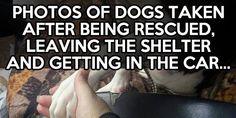 awwww always rescue never breeder...i love my rescue