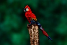 This is not a picture of a parrot (really)