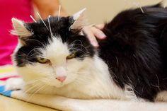 Em busca de uma abordagem holística, cada vez mais profissionais e estudantes de Medicina Veterinária se voltam para a acupuntura animal