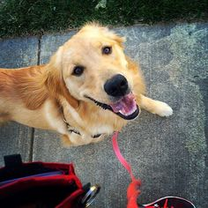 Here's why positive reinforcement is the best way to raise a healthy, happy puppy