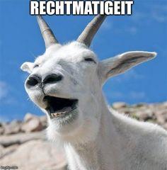 Laughing Goat