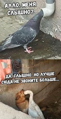 Stupid Funny Memes, Funny Fails, Russian Jokes, Hello Memes, Funny Mems, Cute Funny Animals, Reaction Pictures, Man Humor, Cat Memes