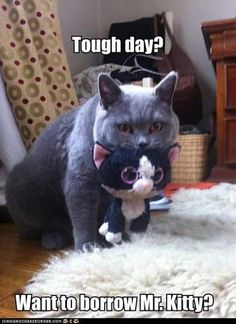 I need to have a Mr. Kitty of my own.....every day......