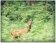 D is for Deer, spotted at the Vyne, National Trust, #alphabetphoto