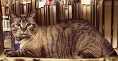Gato fica mais no emprego do que conselheiro que queria demiti-lo