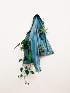 denim | plants