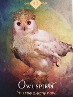 Spirit Animal Oracle nr 43 : Owl Spirit - You see clearly now Oracle Message: Owl Spirit arri Spirit Animal Totem, Animal Spirit Guides, Animal Totems, Animal Meanings, Animal Symbolism, Pet Psychic, Psychic Readings, Power Animal, Angel Cards