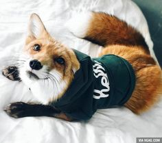 Teen fox