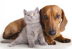 Existem problemas que os cães ou gatos têm que não precisam de consultar o veterinário, podem usar remédios naturais que são muito eficazes. A medicina natural é uma boa pratica, por isso apresentamos aqui 7 remédios naturais para variados problemas que os cães ou gatos podem ter.