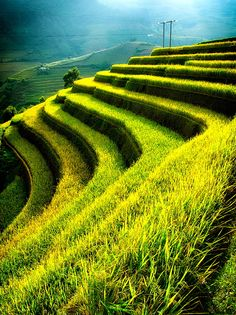 Rice fields on terraces in sunset at Mu Cang Chai, Yen Bai, Vietnam by cristal tran on 500px