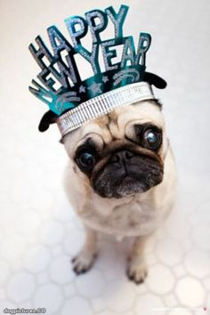 New years dog pictures | happy new year - Dog Pictures