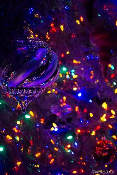 """brfphoto: """" One of the many outdoor Christmas trees currently on display at Longwood Gardens. Purple Christmas, Christmas Mood, A Christmas Story, Outdoor Christmas, Christmas Ideas, Merry Christmas, Christmas Tree Wallpaper, Christmas Background, Christmas Scenes"""