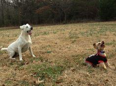 Ok, throw it, I'm ready!