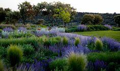 Beautiful blue garden