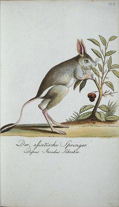 from 'getreue abbildungen naturhistorischer gegenstände' (1795-1807), by johann matthäus bechstein