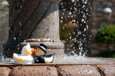 Even the duckies are in love <3