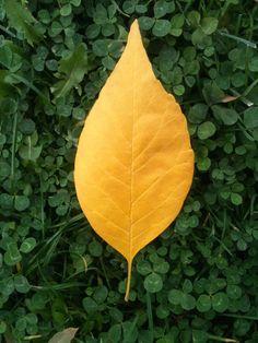 https://berthabella.com/ colors of the fall... how I love you...