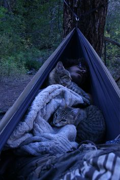 Camping with cats = my dream life. Funny Cat Videos, Funny Cat Pictures, Funny Cats, Crazy Cat Lady, Crazy Cats, I Love Cats, Cool Cats, Camping With Cats, Cat Camping