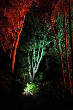 Landscape Lighting design_Insight Light_NZ Pohutakawa (2).jpg