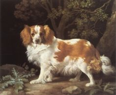 Photographic history of the Cavalier King Charles.