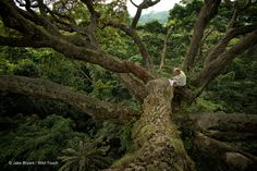 Rêve : méditer au sommet de l'arbre moabi. Gabon. http://www.wild-touch.org/