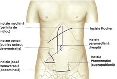Corpul uman organe interne Anatomy, Medicine, Tattoos, Simple Lines, Tatuajes, Medical, Tattoo, Japanese Tattoos, Anatomy Reference
