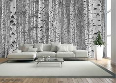 Birch Tree Forest (Black and White) 16.5' x 11' (5,03m x 3,35m)