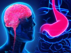 Researchers uncover a potential molecular mechanism linking the gut and brain in the pathophysiology of autism spectrum disorder.