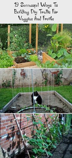 19 Successful Ways To Building Diy Trellis For Veggies And Fruits - Decoration Pallets Can be Easily Tomato Trellis, Diy Trellis, Garden Trellis, Lattice Fence Panels, Trellis Panels, Climbing Flowers, Bamboo Poles, Fruit Decorations, Fruit Plants