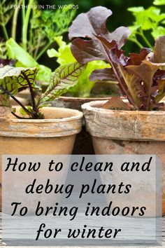 How to Debug and Clean plants to bring indoors for winter. Don't bring bugs into your house with your plants! Here's how to clean them first. #indoorgardening #gardening #homesteading Succulents Garden, Garden Plants, Indoor Plants, Potted Plants, Indoor Herbs, Succulent Planters, Hanging Planters, Air Plants, Cactus Plants